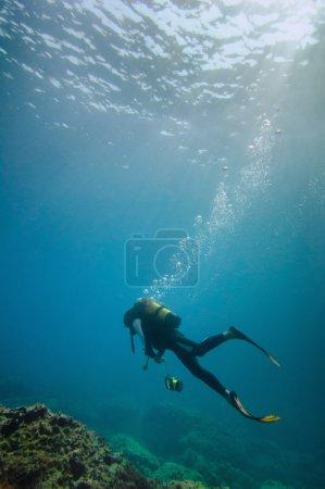 Scuba diver exploring marine life
