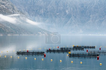 Fish farming facility