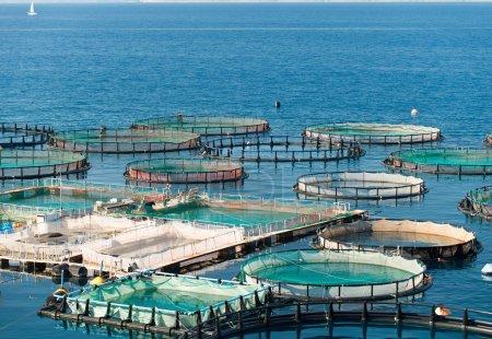 Fish farming facility