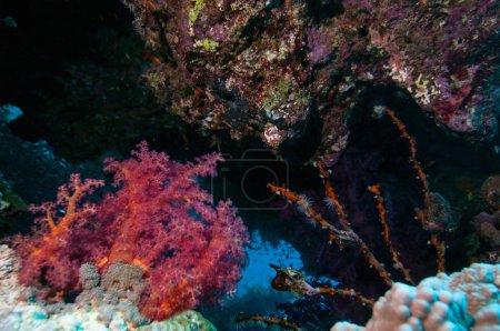 Coral crevice with sea life