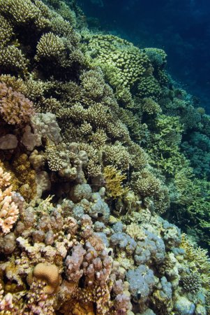 coral underwater formations