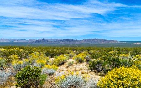Photo pour États-Unis Californie, réserve nationale de Mojave près de la Route 66 - image libre de droit
