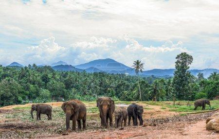 The Sri Lanka Places