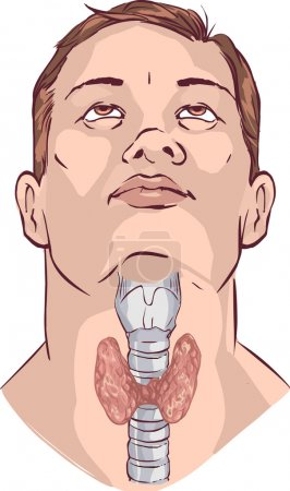 Vector Thyroid gland and larynx