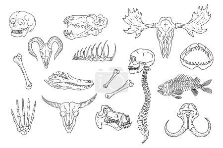 Diverse Skulls and Bones Set.