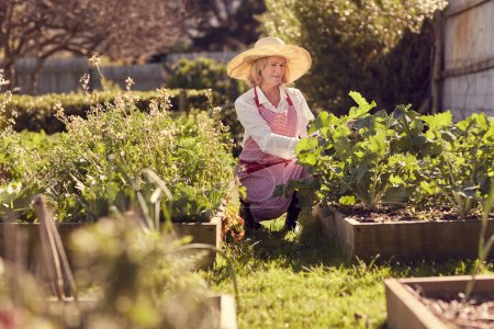 senior woman working in vegetable garden