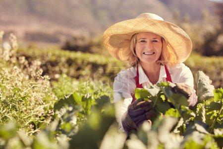 senior woman working in vegetable garden