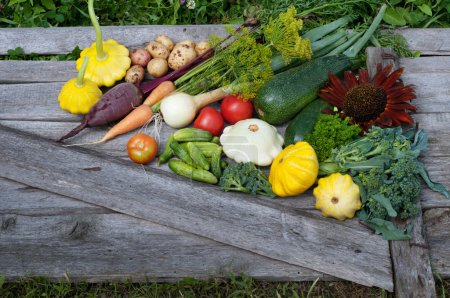 Squash, zucchini, tomatoes, corn, cucumbers, onions, beets, carrots on a wooden board. Vegan concept. Natural organic farm products. Summer vegetable background (wallpaper). Space for text