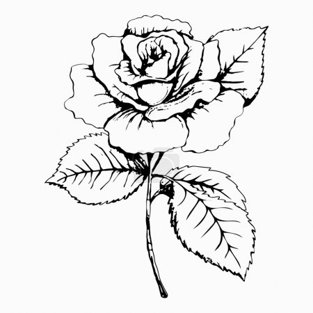 Flower Rose, sketch, painting. Hand drawing. White bud, petals, stem and leaves. Monochrome, Black and white illustration. Decorative element, design element, base element of decor, print, tattoo