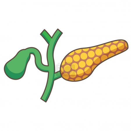 Illustration of Pancreas and gallbladder
