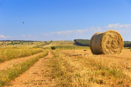 Photo pour Le parc national Alta Murgia est un plateau calcaire, avec de vastes champs et des affleurements rocheux, des prairies caractérisées par des sentiers de moutons, un ancien caroubier, des buissons de lentilles et des orchidées sauvages colorées au printemps. . - image libre de droit