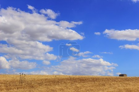 Summer: rural landscape. Between Puglia and Basilicata:hills with cornfields and farmhouse.ITALY