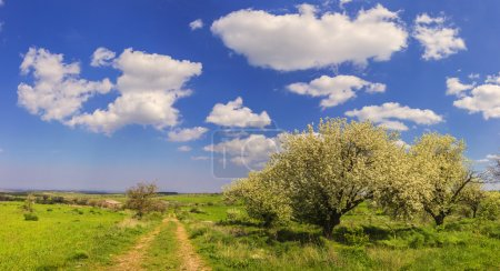 Spring landscape. Alta Murgia National Park: path with trees in bloom. - (Apulia) ITALY-