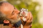 Starý pán líbá novorozené štěně Husky