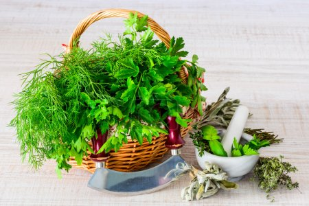 Photo for Basket full of fresh green herbs and pestle and mortar with mezzaluna herb chopper - Royalty Free Image