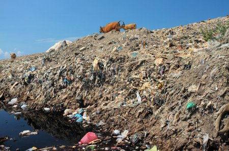 Toxic household trash and hazardous industrial waste contaminates soil and groundwater at the largest, most polluted landfill site on Bali, Indonesia