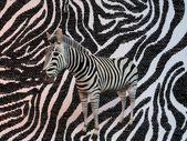 3D zebra s podobnou texturu vzor
