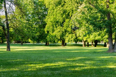 Photo for Park in Spring, Prague, Czech Republic - Royalty Free Image