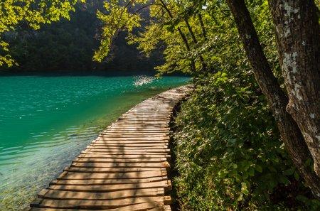 Photo pour Sentier de ruisseau de forêt profonde avec eau cristalline au soleil. Lacs de Plitvice, Croatie - image libre de droit