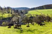 Švýcarské krávy na louce, Aargau, Švýcarsko