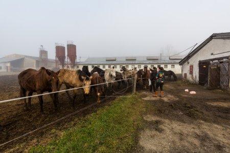 Girl feeding horses on a farm in Slovakia