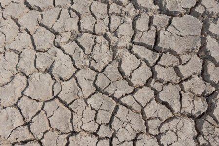 Dry land,cracked land