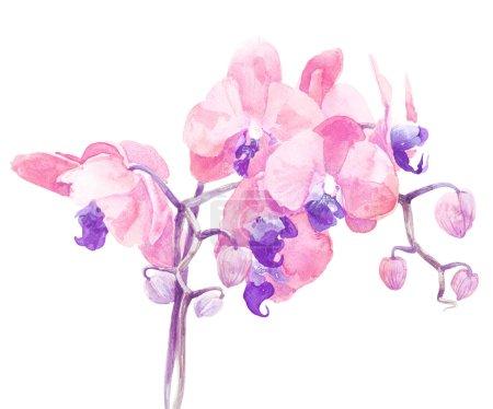 impresión de flor de orquídea en colores suaves, acuarela
