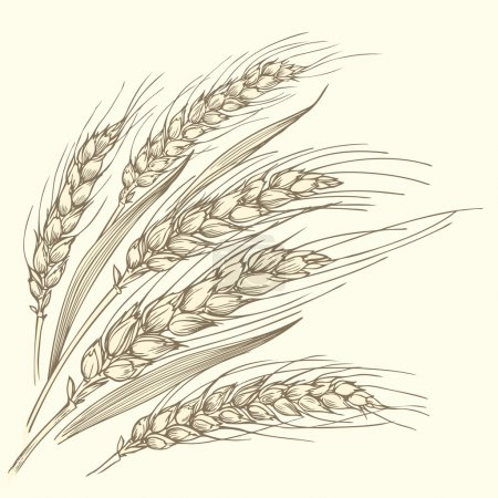 Several ripe wheat ears.
