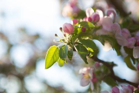beautiful flowers on tree