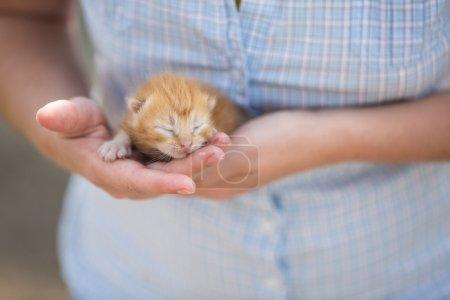 girl holding a kitten baby