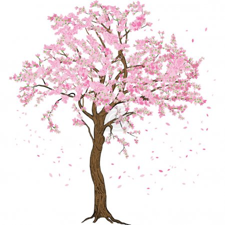 Isolated sakura spring blossom blooming tree with flowers illustration with detailed drawing bark