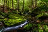 Mossy creek in the Catskills