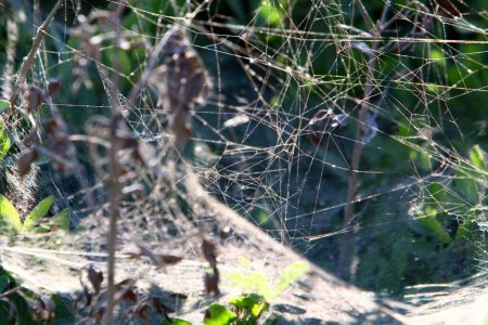 Photo for Close-up view of cobweb threads on leaves and branches of plants. Cobweb on a background of green leaves. - Royalty Free Image