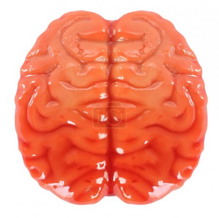 Photo for This is an artificial brain. - Royalty Free Image