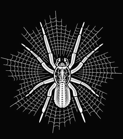 Big tarantula on web