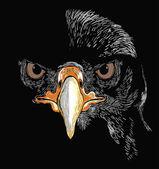 Head of eagle illustration