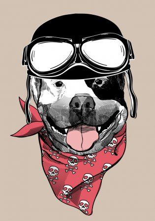Illustration pour Portrait d'un chien dans un casque de motocycliste. Illustration vectorielle. - image libre de droit