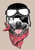 Hund in ein Motorradfahrer-Helm