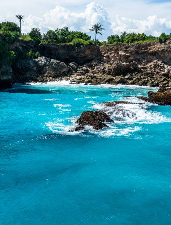 Blue lagoon with palms growing