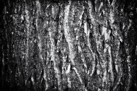The bark of a large tree 3.