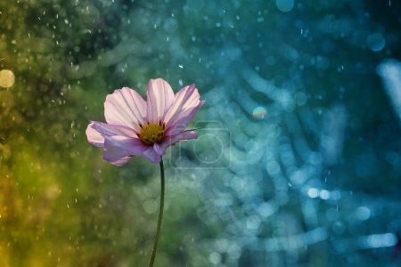 Flower from the garden .