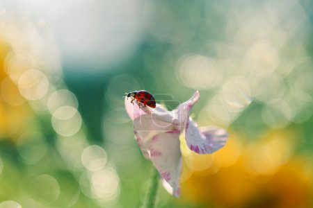 Lookout for a small ladybug 2