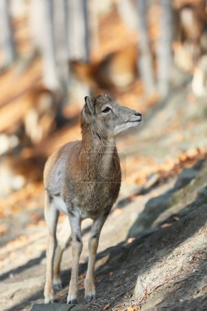 Young deer on a sunny day