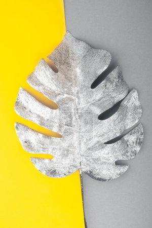 Photo pour Feuille de monstère argentée sur les couleurs tendance 2021 comme fond lumineux et gris ultime - image libre de droit