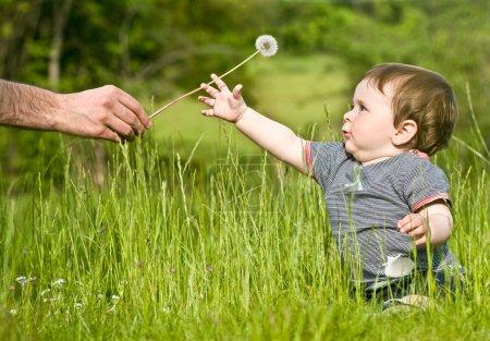 Photo pour Mignon petit enfant apporter pissenlit de l'adulte à la campagne pendant l'été - image libre de droit