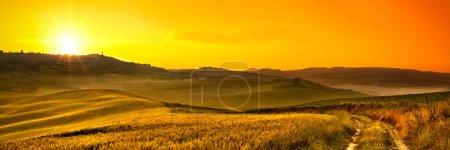 Tuscany blé champ panorama au lever du soleil
