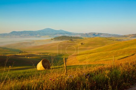 Tuscany wheat field hill in a sunny day