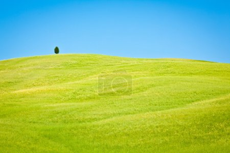 Photo for Tuscany wheat field hill in a sunny day - Royalty Free Image