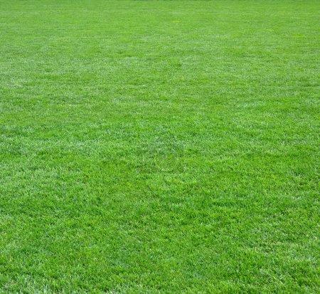 Green grass field square