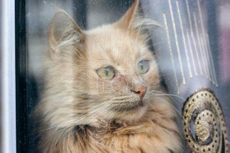 gato rojo sentado en el alféizar de la ventana y mirando a través